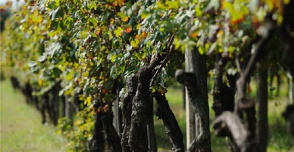 Canavese: tour guidato a base di cibo e vino da Torino