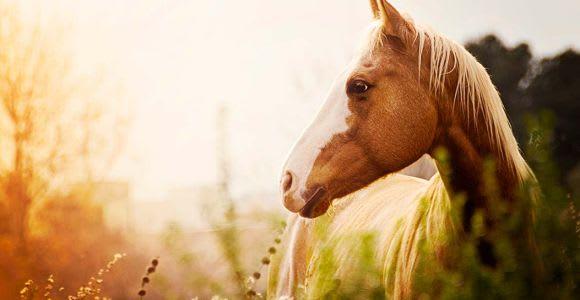 Horseback Riding from Siena