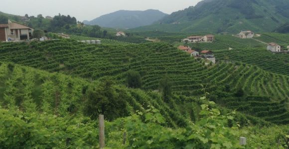 Prosecco Tour and Tasting from Venice