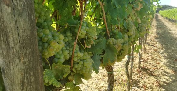 Azienda Agricola San Quirico: Maxi Wine Tour