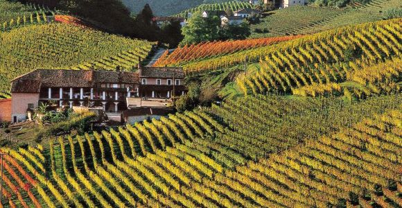 Full-Day Langhe Region Tour with Wine Tasting