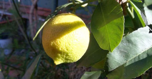 Palermo: lezioni di cucina e limoncello