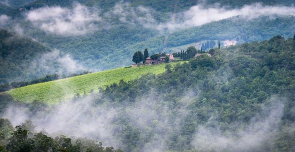 Chianti: Total Immersion Wine Tour with Picnic Lunch