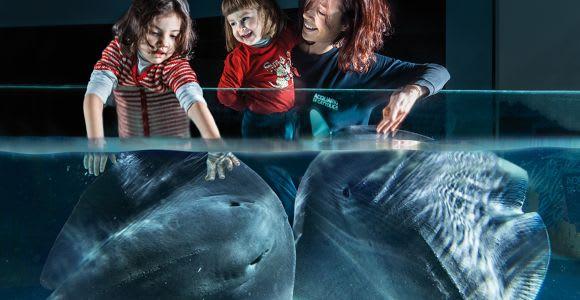 Aquarium of Cattolica Entry Ticket