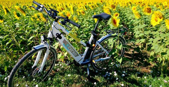 Pisa: Self-Guided E-Bike Tour