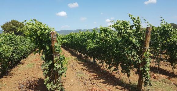 San Gimignano Area: Wine Tasting Experience