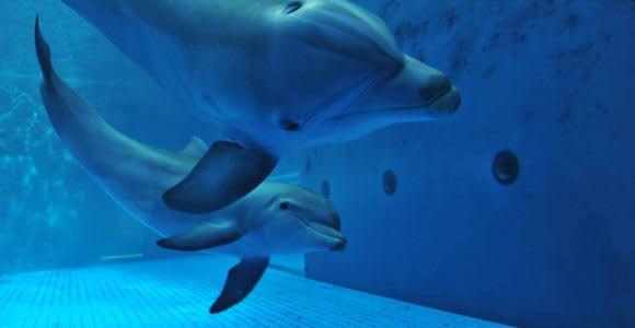 Genoa: Aquarium of Genoa with Lunch