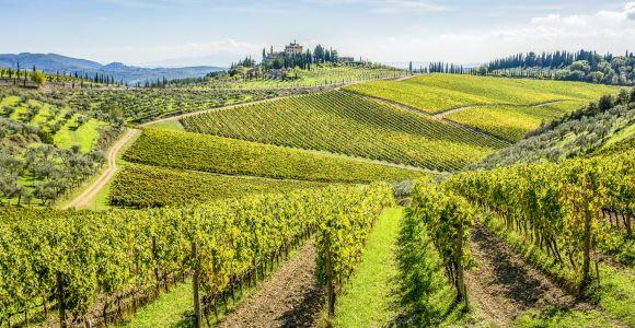 Firenze: tour delle cantine del Chianti con degustazione