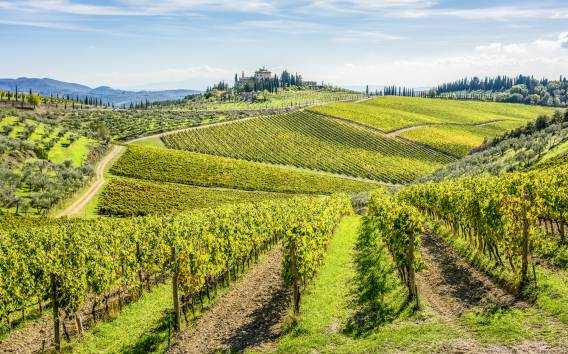 Florence: Chianti Wineries Tour with Food and Wine Tasting
