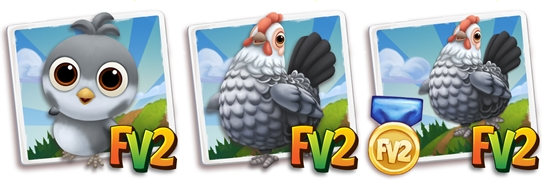 Silver Campine Chicken