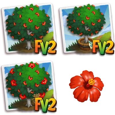 Chinese Hibiscus Tree