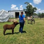 Shamrock and volunteer Julie