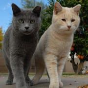 Community Cats