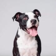 Bighetti (Dog)