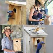 Bluebird Nestboxes