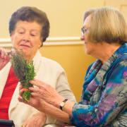 Elder with herbs