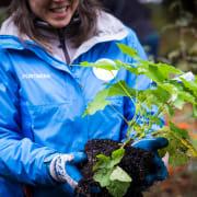 Forterra Planting