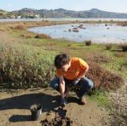 Planting native species on Aramburu