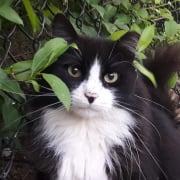 Feral kitty Merlin
