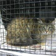 Cat in a Trap