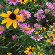 Flowers in the Formal Perennial Garden