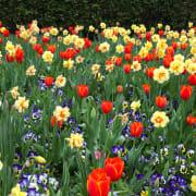 Spring/Blooms