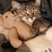 Kitty and Teddy Bear