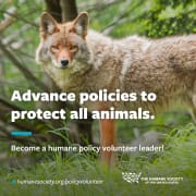 Humane Policy Volunteer Leader Program