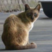 LB Community Cat