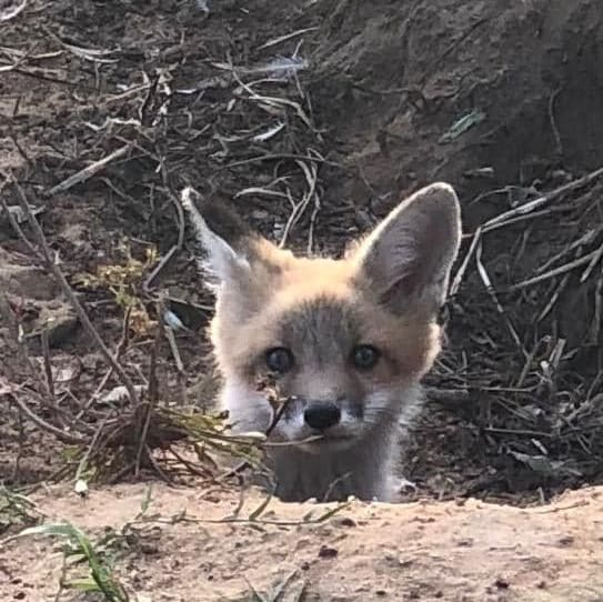 Wildlife Volunteer Transporter - Mobile, Alabama: WILDLIFE