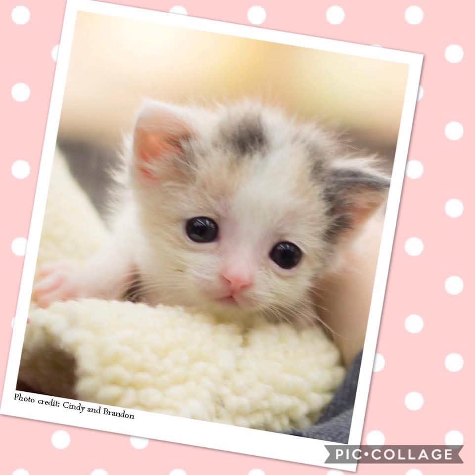 Furrever Cat And Kitten Rescue Volunteer Opportunities Volunteermatch
