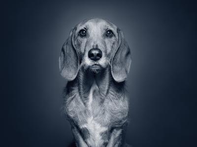 Hundekrankheiten im Alter