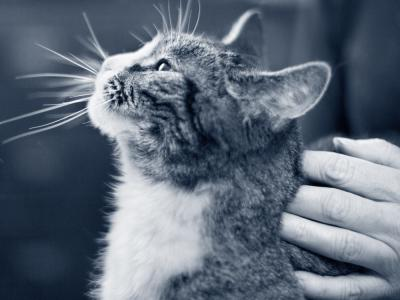 Sterilisation af kat