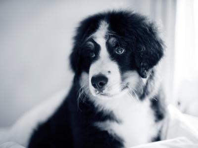 Diarrea en el perro