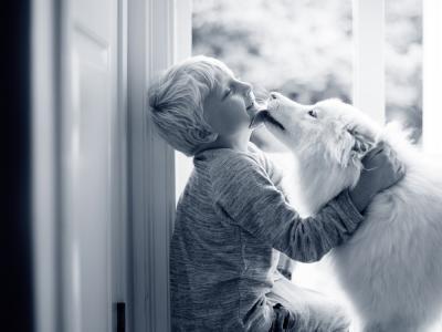 intoxicación cebolla perros