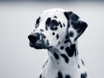 El mastocitoma canino