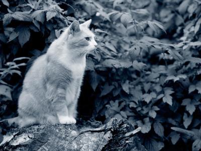 Chat qui ne mange pas