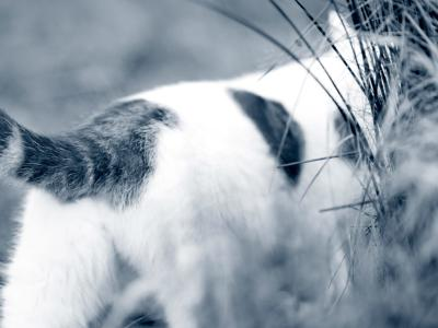 Constipation chez le chat