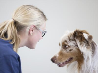 Dermatite pyotraumatique chez le chien