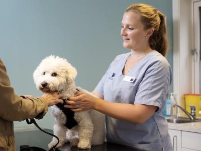 Dysplasie des hanches chez le chien
