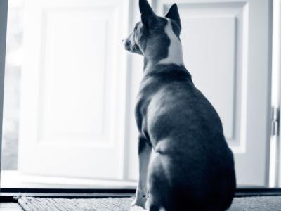 Glaucome chez le chien