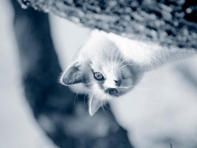 Solution de réhydratation pour chat, faite maison