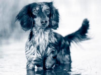 Solution de réhydratation pour chien faite maison