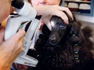 Détection des tares oculaires