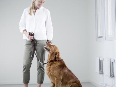 Examen clinique vétérinaire