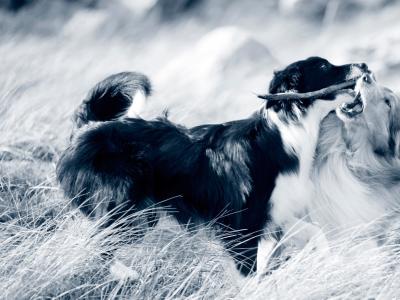 Examen orthopédique chien et chat