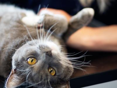 Massage pour animaux