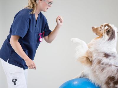 Rééducation fonctionnelle vétérinaire
