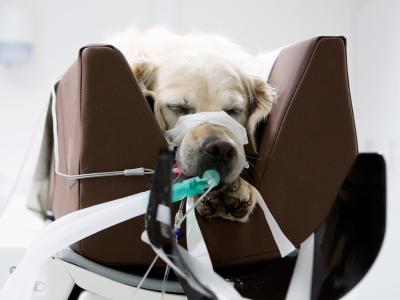 TAC para mascotas