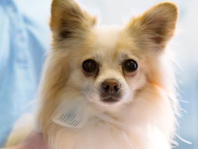 periodontitis en los perros